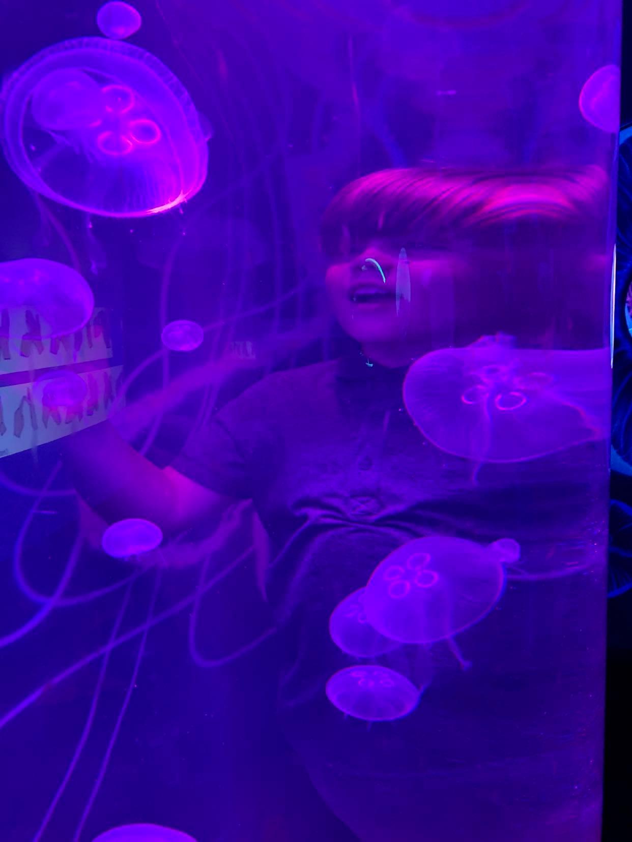 Sea life Great yarmouth review, a suffolk mum blog