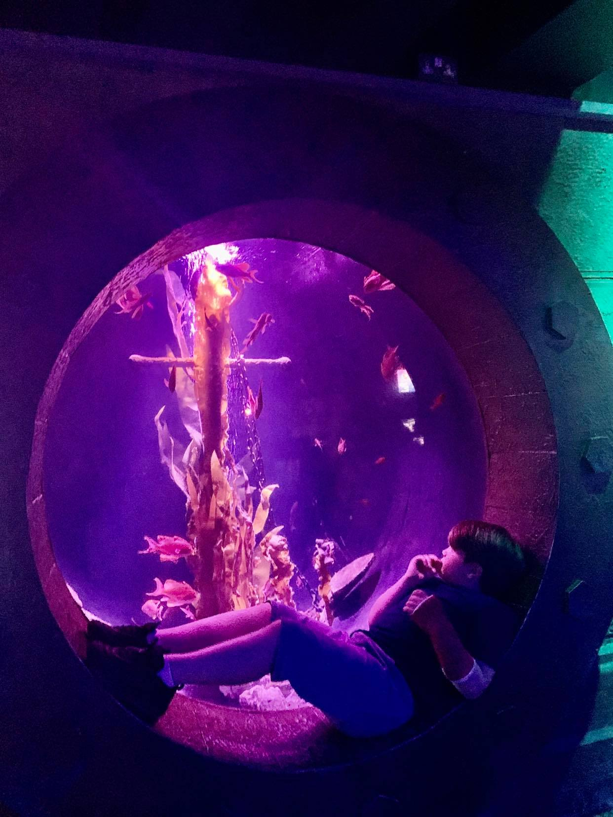 36 hours in london with kids, sealife centre london review